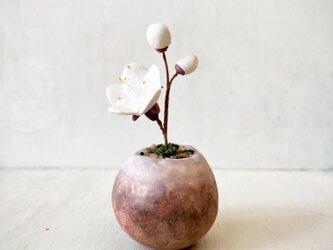 5404.bud 粘土の鉢植え ウメ - 白の画像