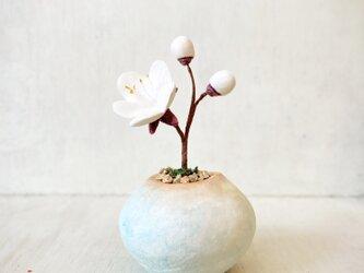 5405.bud 粘土の鉢植え ウメ - 白の画像