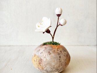 5406.bud 粘土の鉢植え ウメ - 白の画像