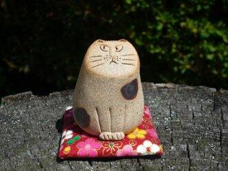 まめ猫 にゃんの画像