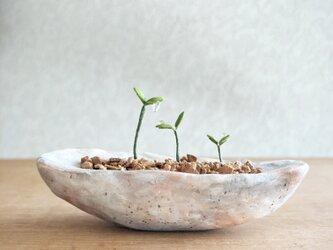 5407.bud 粘土の鉢植え 背の順の画像
