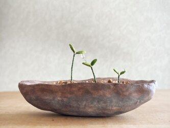 5410.bud 粘土の鉢植え 背の順の画像