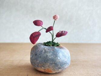 5411.bud 粘土の鉢植え ヒメツルソバの画像