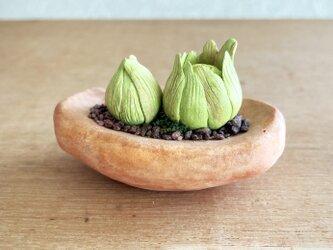 5412.bud 粘土の鉢植え フキノトウの画像
