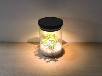 bottle terrarium mini [warm]の画像