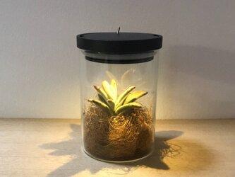 bottle terrariumの画像