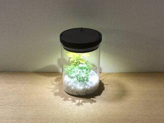 bottle terrarium mini [cool]の画像