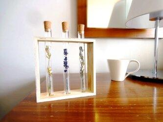 Botanical Collection ■ フレームボックス 試験管 3本セット ■ デルフィニウムの画像