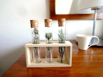 植物標本 Botanical Collection ■ ガラス管 ■ グリーン3種の画像
