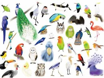 野鳥曼荼羅/大判ポスターの画像