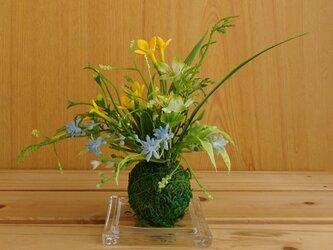 コケ玉ガラスアレンジ(黄色)の画像
