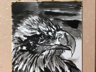 天空を司る鳥の王者【鷲】の画像
