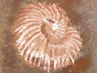 額付き銅板レリーフ ユーパキディスカス1の画像