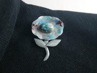 クリソコラの花の画像