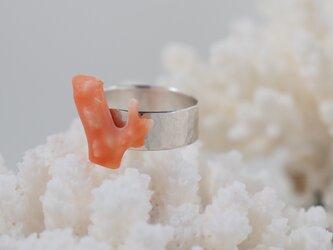 深海珊瑚の指輪の画像