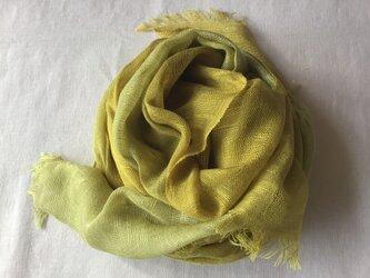 草木染め シルクストール コブナグサ 黄緑の画像