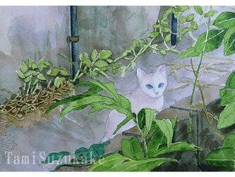 水彩画・原画「裏路地の白猫」の画像