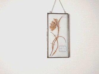 植物標本 ■ 押し花の壁掛けフレーム  縦長サイズ ■ フリチラリア メレアグリスの画像