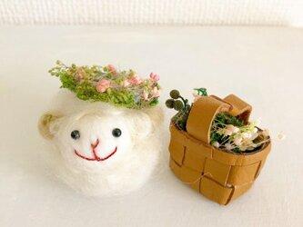 ラムキンちゃんお花を摘みにの画像