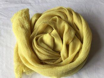 草木染め コットンショール コブナグサ 黄色の画像