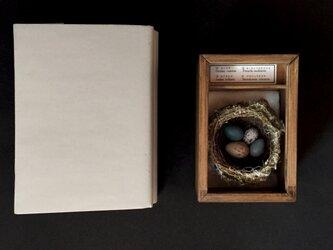 疑惑の小箱その二。の画像