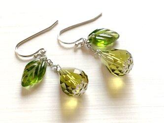 洋梨のピアス | 樹脂ピアス イヤリング 果物モチーフの耳飾り 春のキレイめグリーンの画像