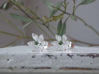 SV小花のピアス(グリーントルマリン)の画像