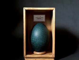 エミューの卵標本その二十二。の画像