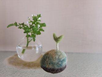 クルミの芽とミニフラワーベースの画像