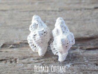 【陶土】Apple Murex 巻貝のほっこりイヤリング 蝶バネの画像