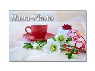 1451)クリスマスローズ 2    ポストカード5枚組の画像