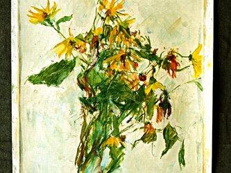 野に咲く菊の画像