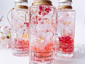 3本セット 春を告げる桜のハーバリウム  spring フラワーギフト 送別会の画像