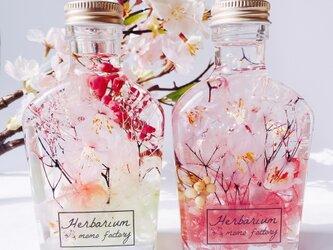 2本セット 春を告げる桜のハーバリウム spring  フラワーギフトの画像