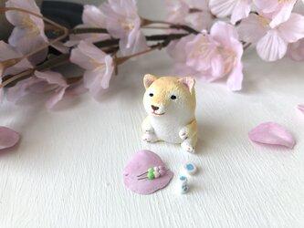 お花見柴犬さん(茶色)の画像