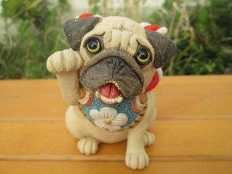 招き犬★パグ(金運)の画像