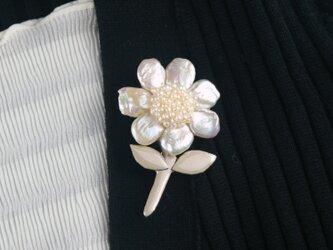 真珠花の画像