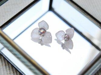 桜色あじさいのピアス の画像