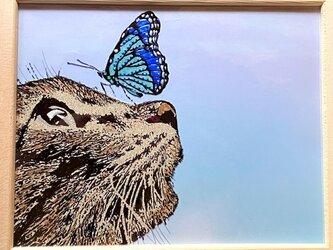 猫と蝶の画像