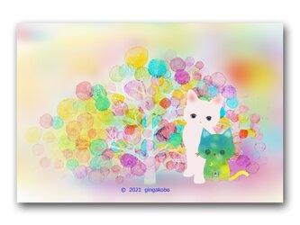 「記念撮影で緊張中?^^」猫 ネコ ねこ ほっこり癒しのイラストポストカード2枚組 No.1328の画像
