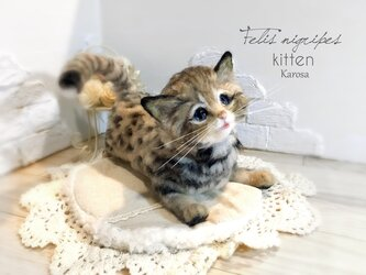 可動 ポーズを変えられる クロアシネコ 赤ちゃん 子猫 世界最小の猫 ✨の画像