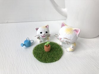 芽が出たよ!猫さんコンビの画像