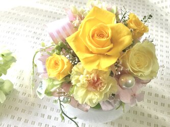 Sun Rose 黄色いバラの画像
