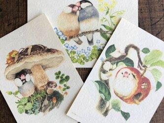 ポストカード『文鳥』3種類セットの画像