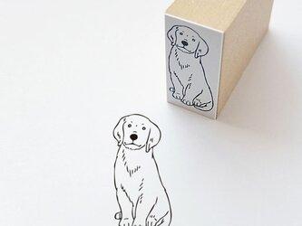 ラバースタンプ 犬の画像