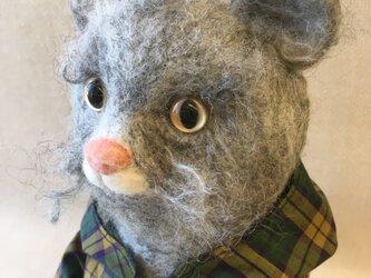 動物シリーズ「ジャケットを着たネコ」の画像