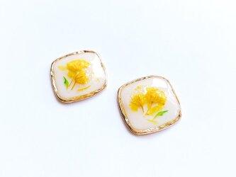 黄色/花/ドライフラワーピアス / イヤリング【受注製作】の画像