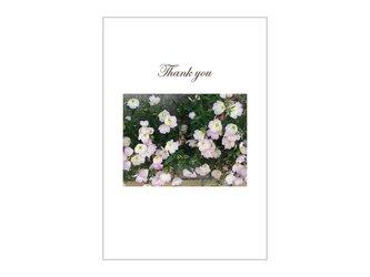 ピンクの野草の39cardの画像