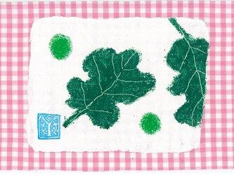 新緑、葉の画像