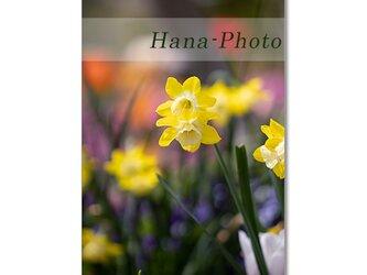 1467) 黄色の花(ラッパ水仙、八重姫リョウキンカ、カタクリ、ユーフォルビア、姫リョウキンカ)    ポストカード5枚組の画像